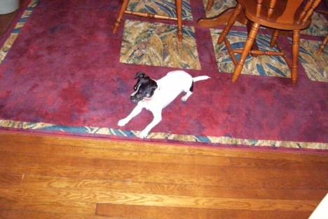 My Dog 10.23.09